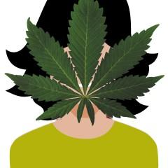 O, Cannabis! The State of Pot in the State